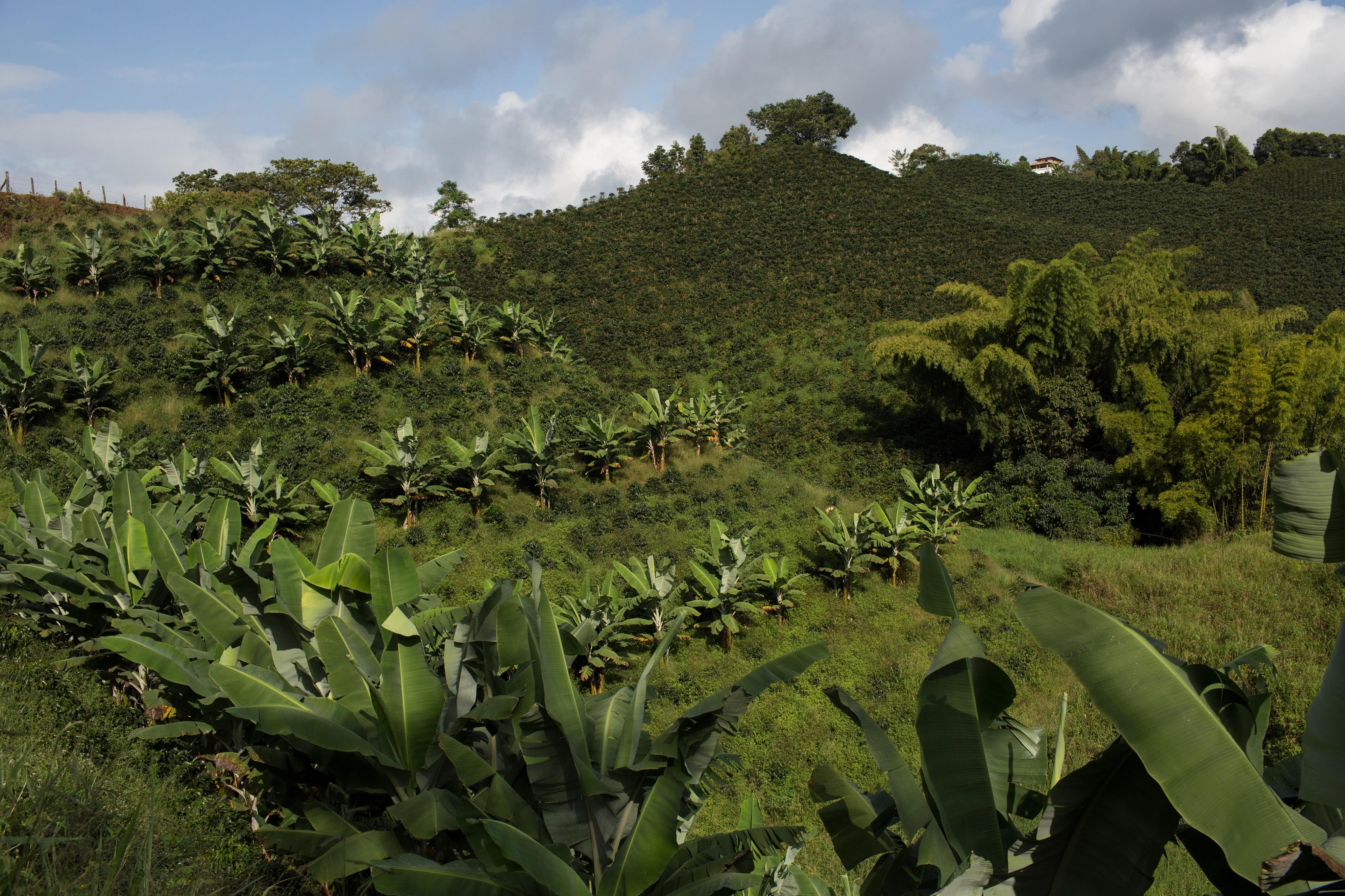 Colombia Coffee Producers COOPERANDES