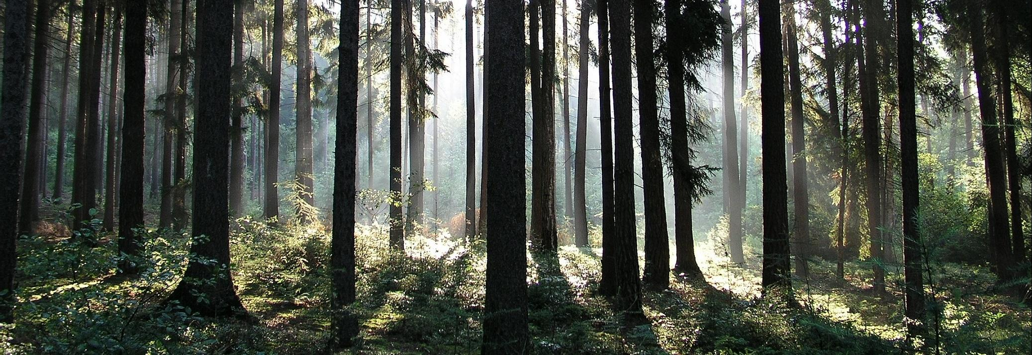 Natural forest © Forest Stewardship Council, Milan Reíka
