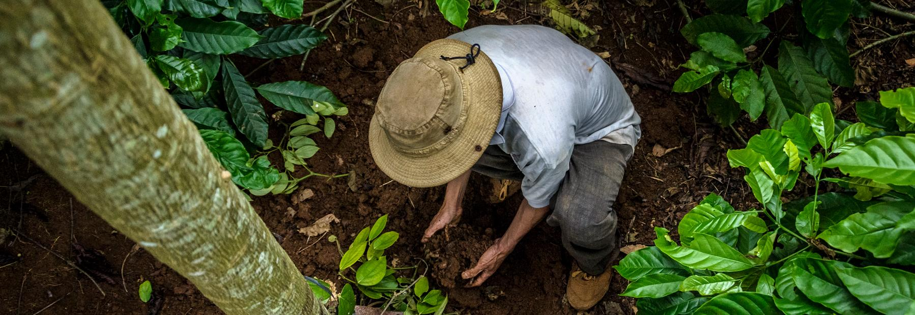 Farmer with hands in soil © Carlos Rubio and Global Coffee Platform.jpg