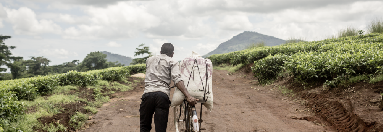 Worker in a tea plantation in Sukambizi, Malawi © Martine Parry for Fairtrade Foundation