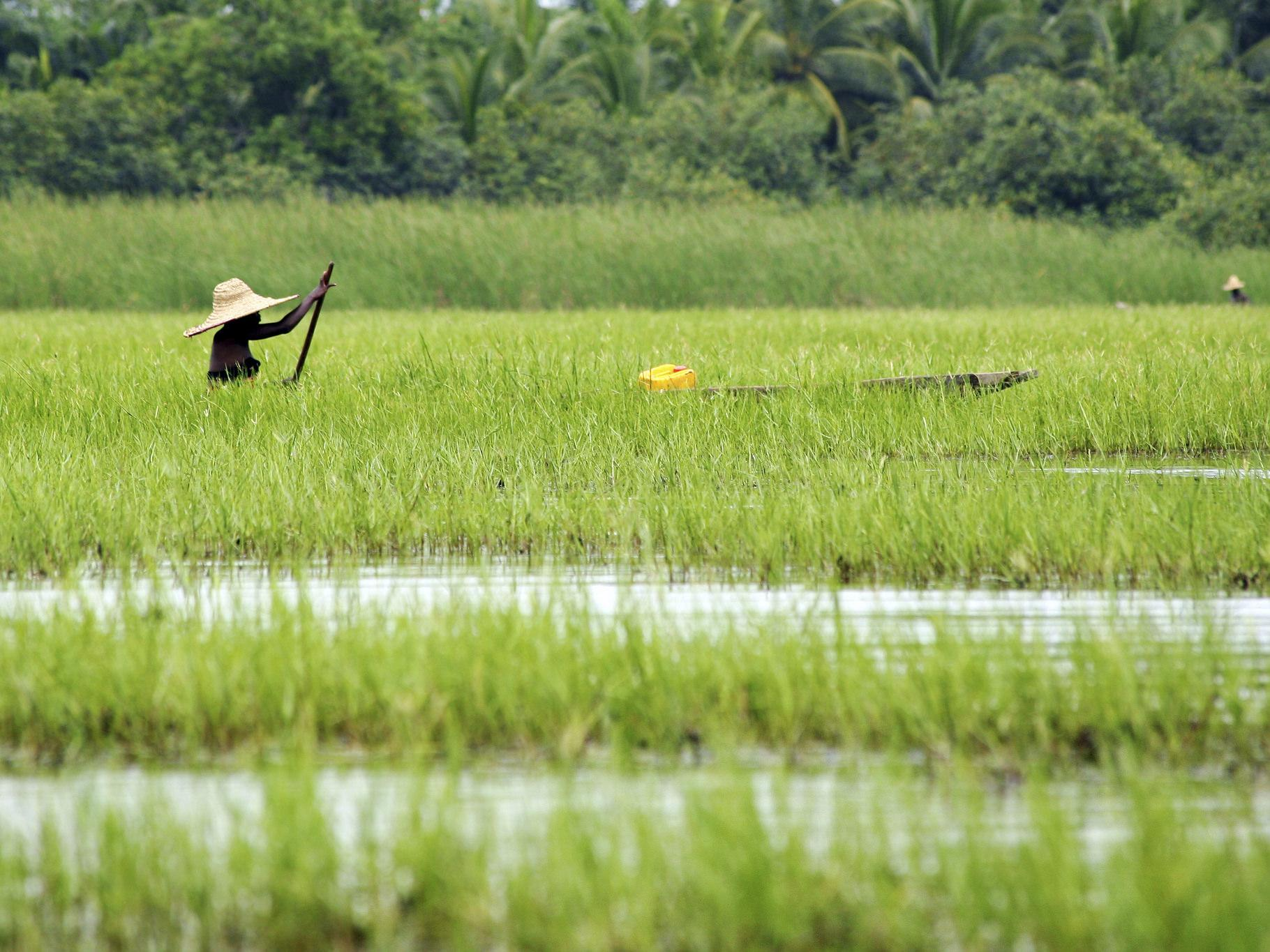 Boat crossing rice paddy © UEBT and SCBD
