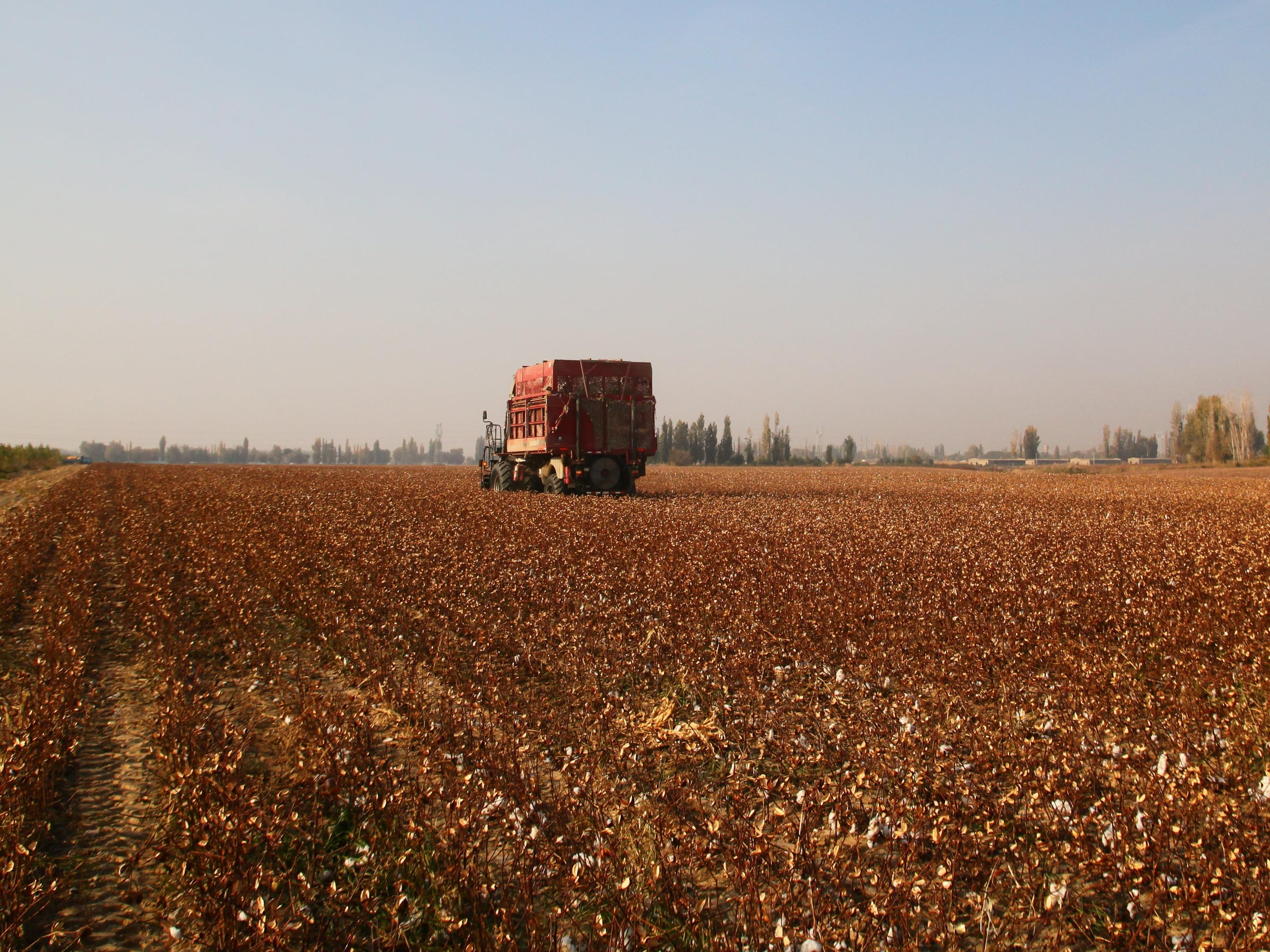 Harvesting cotton © Better Cotton Initiative