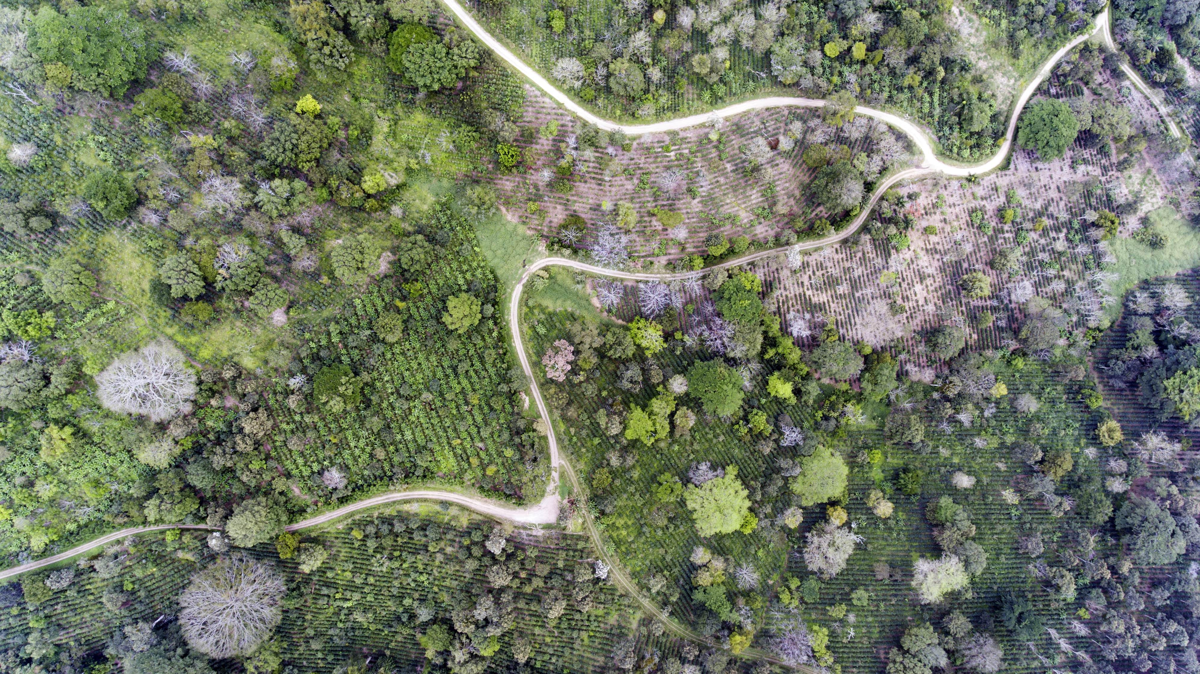 Coffee plantation seen from a drone in Nicaragua © Giuseppe Cipriani for UTZ