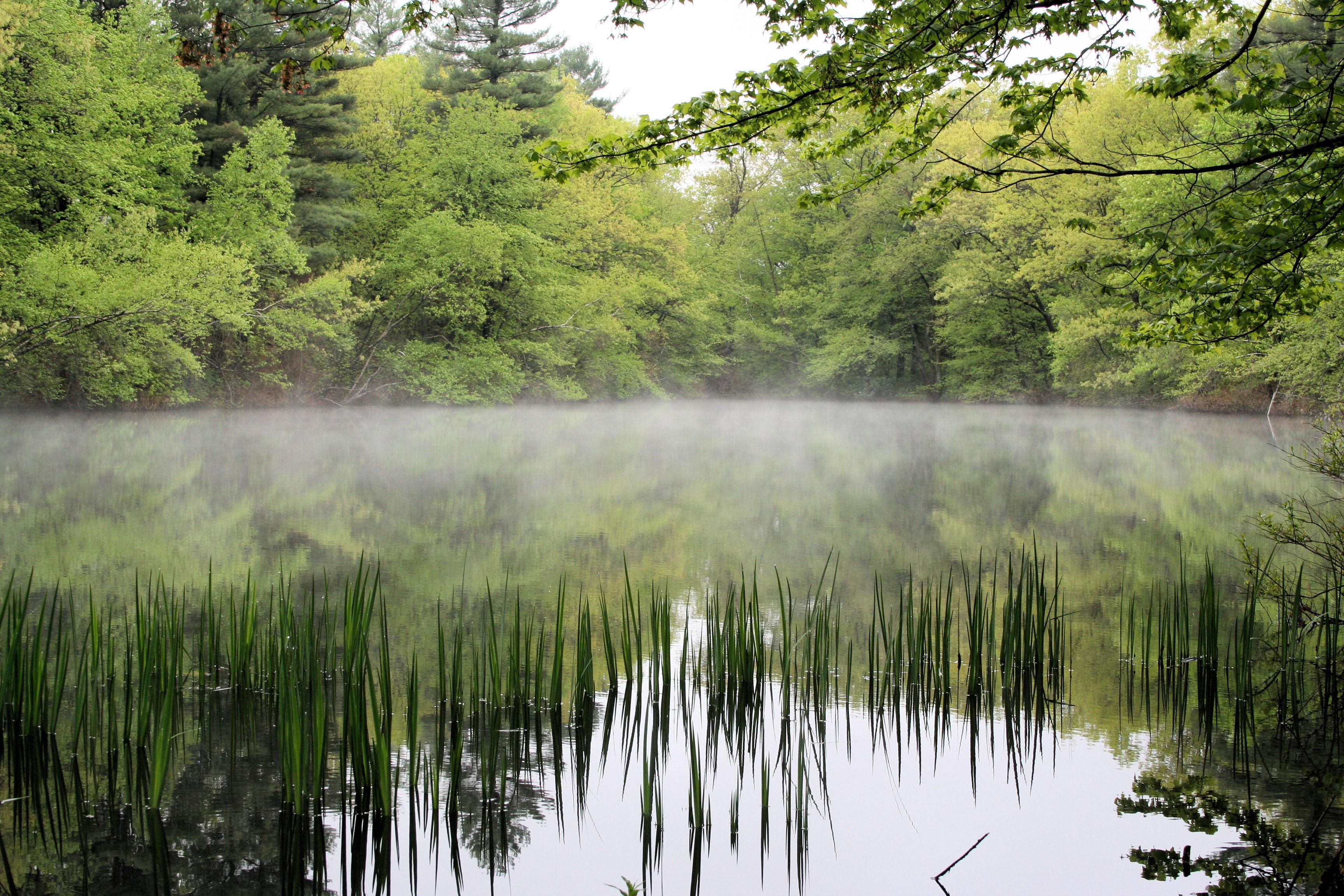 Mist on a Pond, Rainforest Alliance, Sue Bruce