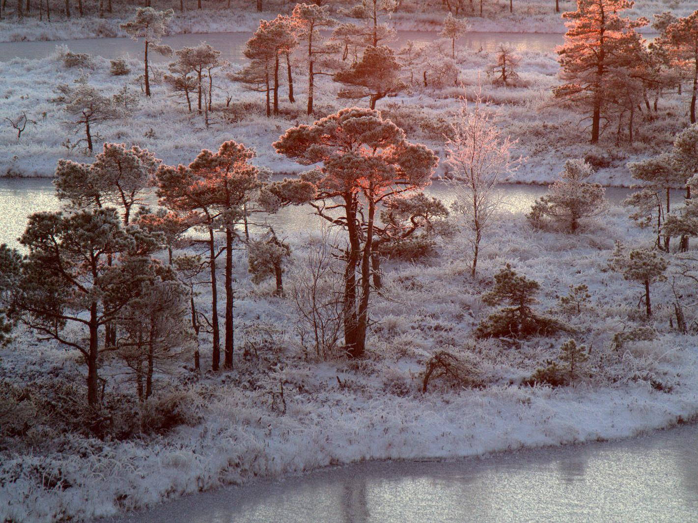 Frosty Forest © Maris Zudrags for Accreditation Services International