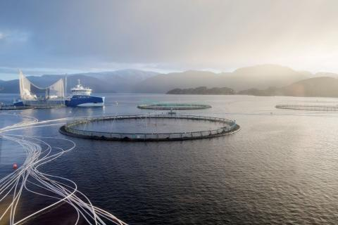 ASC certifed salmon farm, Leroy Midt, by Tove Breistein for ASC