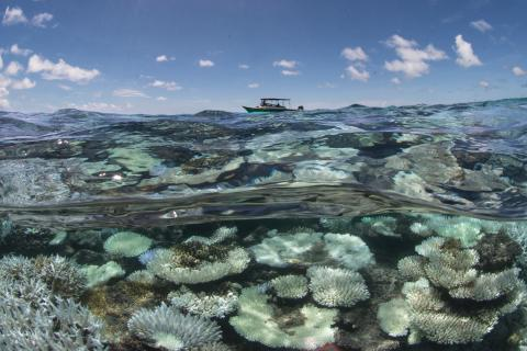 Coral bleaching in Maldives © Lucy Erickson and MSC