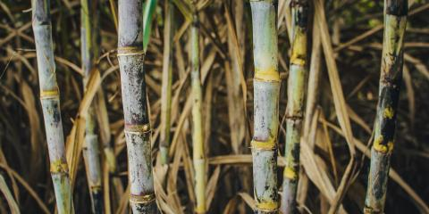 Sugar cane stalks © Joe Woodruff for Bonsucro