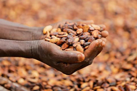 hands_cocoa_beans_Ghana © Rainforest Alliance
